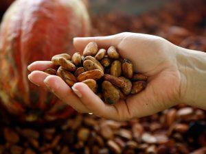 Richmond Chocolate Cocoa Beans